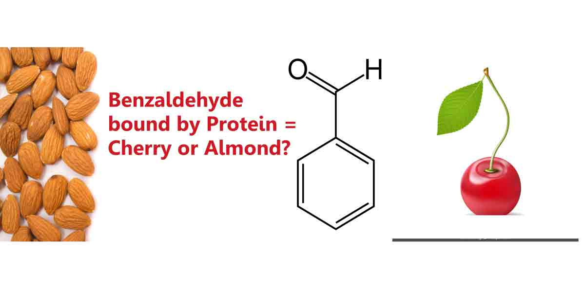 Protein Flavoring Problems: The Whys, Wherefores & Solutions. A benzaldehyde compound can have an almond flavor or cherry flavor when bound with protein.