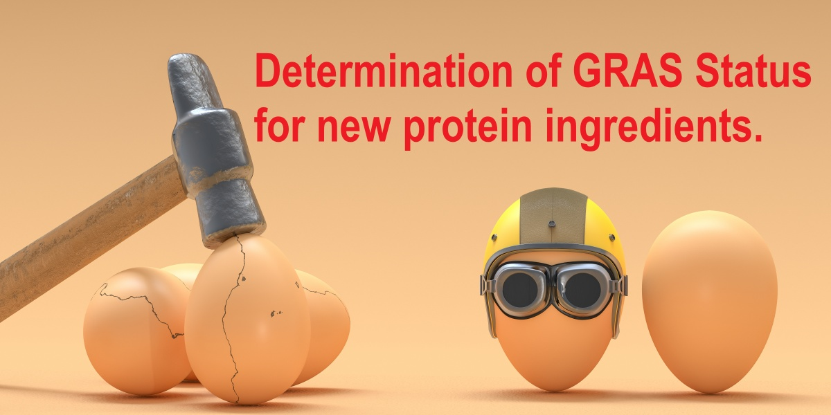 Determining GRAS status for new protein ingredients requires looking at all safety aspects, as represented in this illustration of an egg wearing a safety helmet and goggles beside three eggs cracked by a hammer.