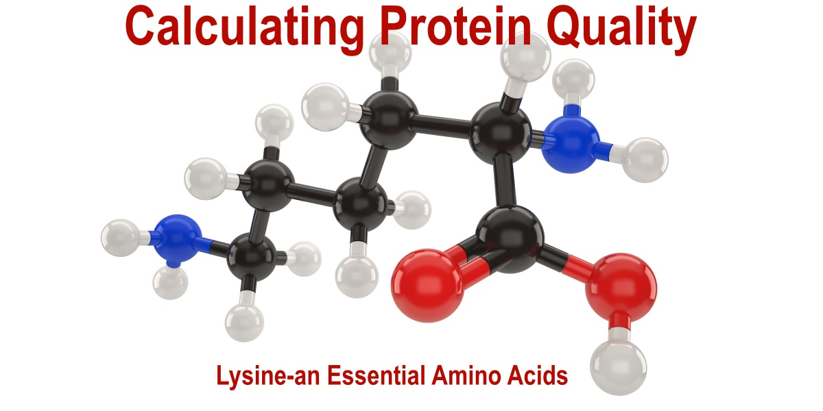 Lysine is one of nine essential amino acids not made by the body, and essential amino acids must be added to foods or beverages to make a complete protein.