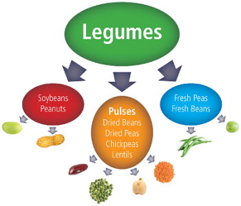 What are pulses and legumes